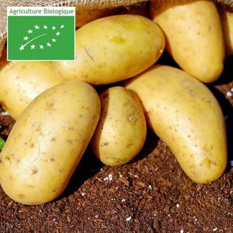 Pommes de Terre bio nouvelles