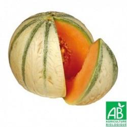 melon charentais Bio