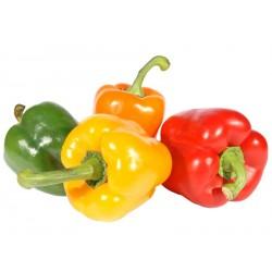 Poivrons (3 couleurs différentes)