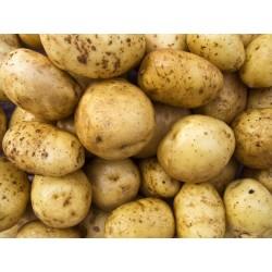 Filet de pommes de terre bintje 2,5kg
